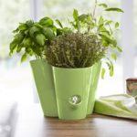 emsa_fresh-herbs-trio-kraeutertopf_439532_gruen_milieu